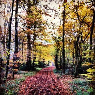 Ah autumn