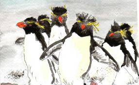 18-Rockhopper penguins