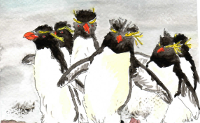 18-Rockhopper penguins