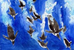 19-Emperor penguins diving