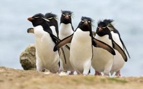Penguins-hd-wallpapers