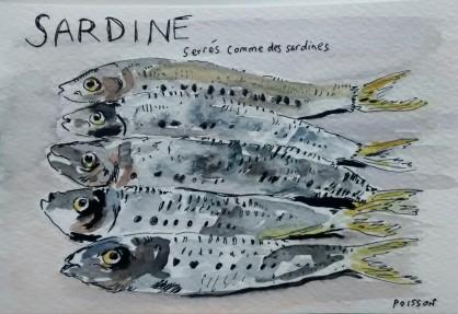 213- Sardine