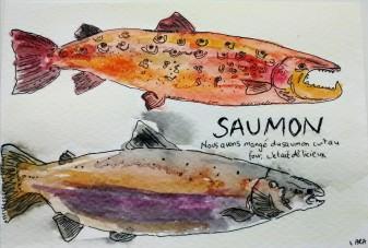 215- Salmon
