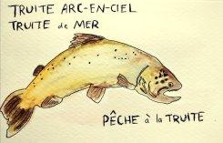 217 - Trout