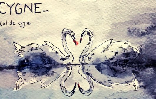 219-Swans