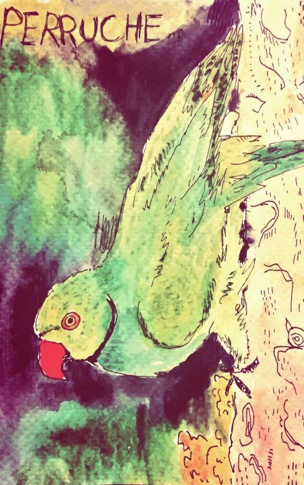 220- Parakeet