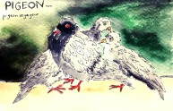221-Pigeon