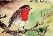 223- Robin