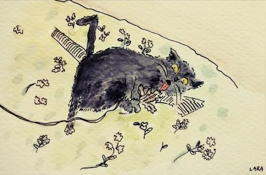 261- #catsofinstagram