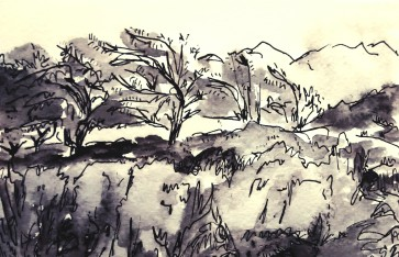 306- Bent back trees in the Lake District