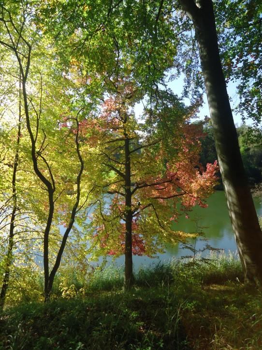 Autumn in Chateau La Hulpe